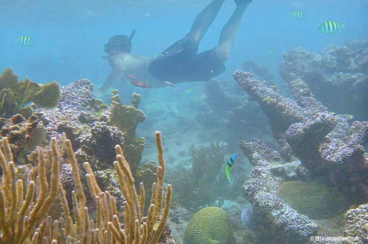 St John's #1 Snorkeling Spot