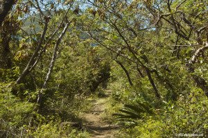 Johnny Horn Trail heading down to Leinster Bay and Waterlemon Cay.
