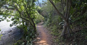 Leinster Bay Trail to Waterlemon Cay, St John