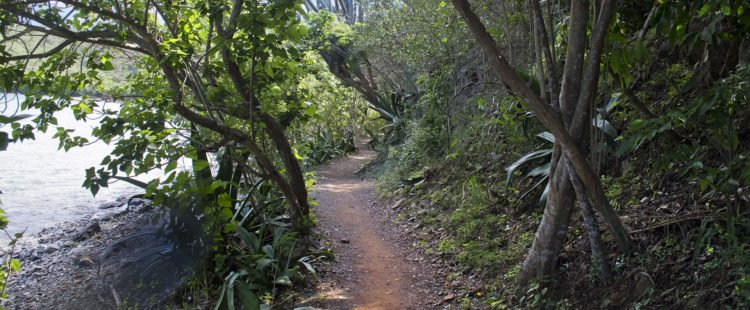 Leinster Bay Trail