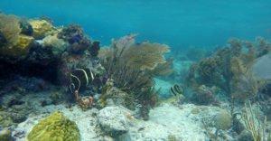 Waterlemon Cay underwater reef image
